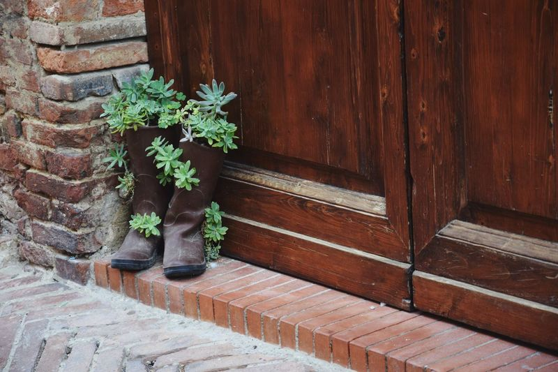 Low section of potted plant on wooden door of house