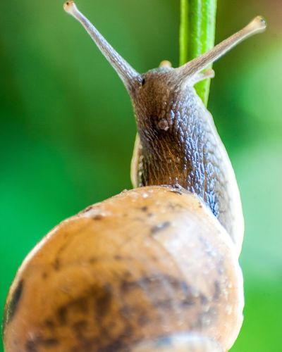 EyeEm Selects Close-up Insect Green Color Colored Background No People Nature Snail🐌 Snail Collection Snail Shell Snail Closeup Snail Photography Macro Photography Beauty In Nature