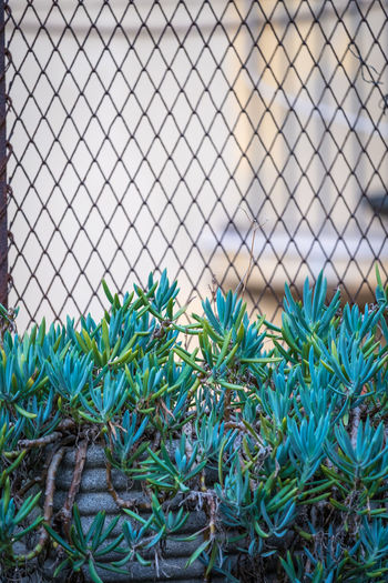 Beauty In Nature Blue Botany Close-up Day Fence Focus On Foreground Fragility Full Frame Green Green Color Growing Growth Leaf Nature No People Outdoors Plant Plant Life Scenics Sky Tourism Tranquil Scene Tranquility
