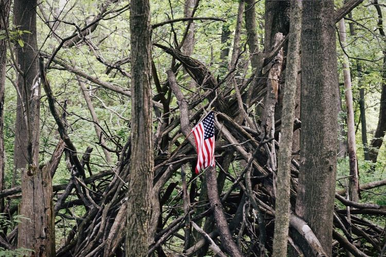 Flag Patriotism Tree Tree Trunk Independence Forest Nature No People Day Pride Outdoors Branch Fort Tree Tree Trunk Tree Fort Tree House America Summer 4th Of July Outdoor Photography The Great Outdoors - 2017 EyeEm Awards
