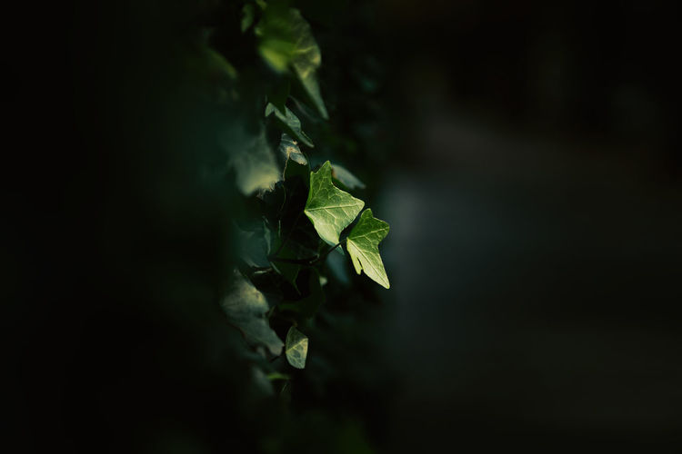 Get closer to your object. Beauty In Nature Black Background Close-up Freshness Green Leaf Nature Night No People Outdoors Plant First Eyeem Photo