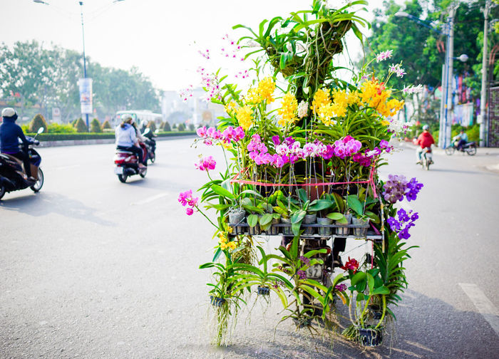 Adult Adults Only Beauty In Nature Bicycle Day Flower Land Vehicle Men Mode Of Transport Nature Outdoors People Plant Real People Stationary Transportation Tree
