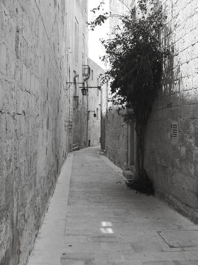 Architecture Built Structure Narrow Pathway Long Empty Road Lane Treelined Pillar Path Wall Lamp Alley Passageway