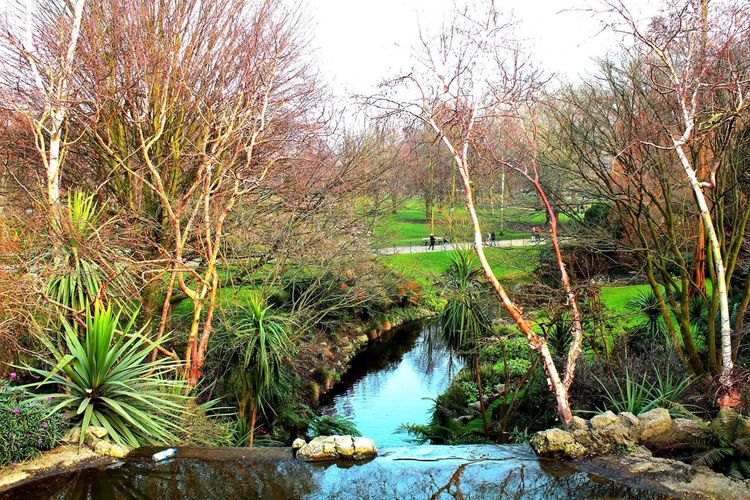 London Lifestyle Tree Nature Water Scenics Tranquility Beauty In Nature Outdoors River Tranquil Scene Environment Green Color Forest Landscape Sky Day Stream - Flowing Water Vacations No People
