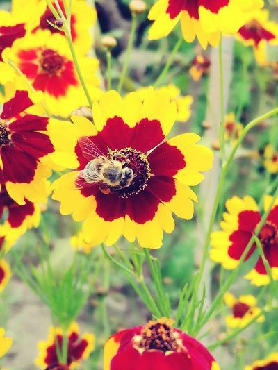 Bee 🐝 Fine Art