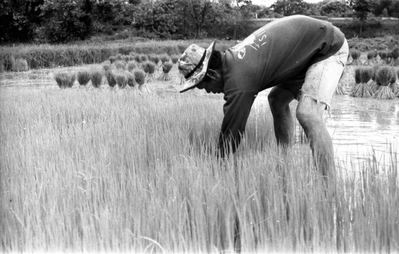 Side view of elephant standing on field