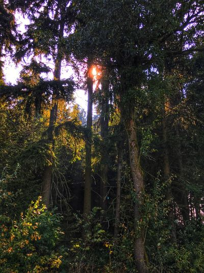 The Sun breaking through. Tree Forest Low Angle View Growth WoodLand Sun Tree Trunk Tranquility Nature Tranquil Scene Sunbeam Branch Scenics Beauty In Nature Green Lens Flare Outdoors Non-urban Scene Tall - High Day Naturelovers Natural Beauty Fichtelgebirge