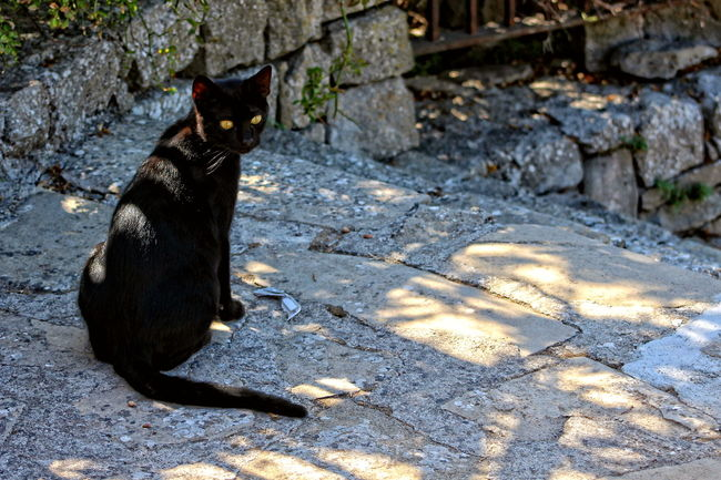 Animal Themes Animali Belvedere Black Color Borgo Dei Borghi 2015 Borgo Medievale Castello Medievale Domestic Animals Domestic Cat Estate Feline Gatto Montalbano Elicona Natura Nature No People Outdoors Pets Punto Panoramico Sicilia