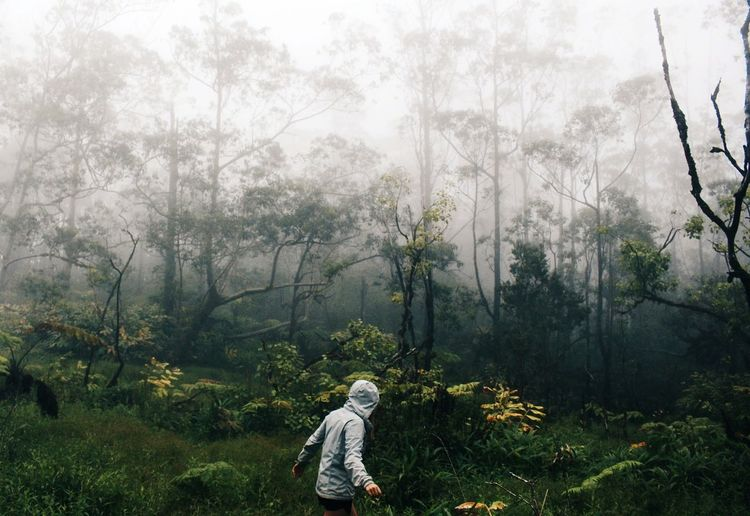 Person In Foggy Forest