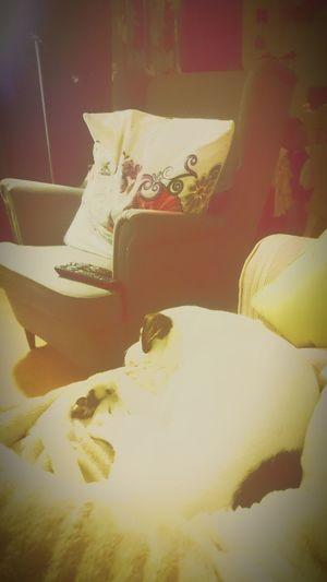Oscar Relaxing ! First Eyeem Photo