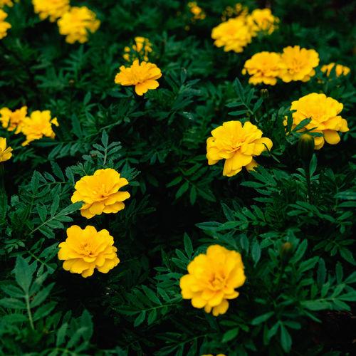 Flower on side