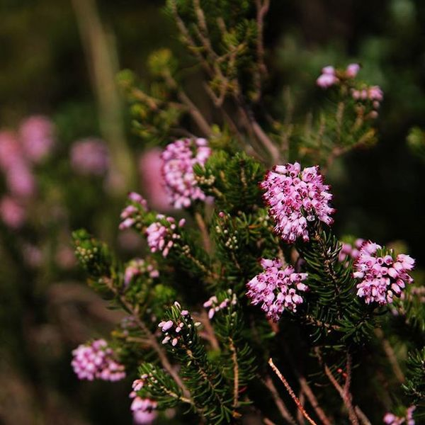 Flowers Pink Macro Autumn MonteArgentario Nature Macrophotography
