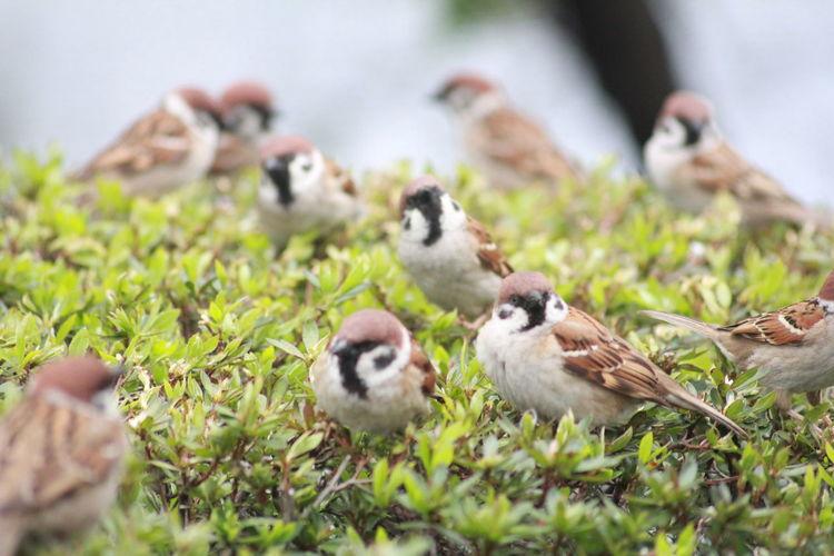 Close-up of birds perching on grass
