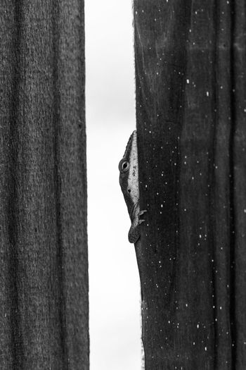 FEEL the Wood. BE the Wood. Enjoying Life Cheese! NX1 Nature Nature_collection Nature Photography Nature On Your Doorstep Still Life Fine Art Wood Wood - Material Lizard Lizards Lizard Love Lizard Watching Lizard Close Up Reptile Reptiles Gods Creation Black And White Black & White Black And White Photography Monochrome Point Of View Textures And Surfaces
