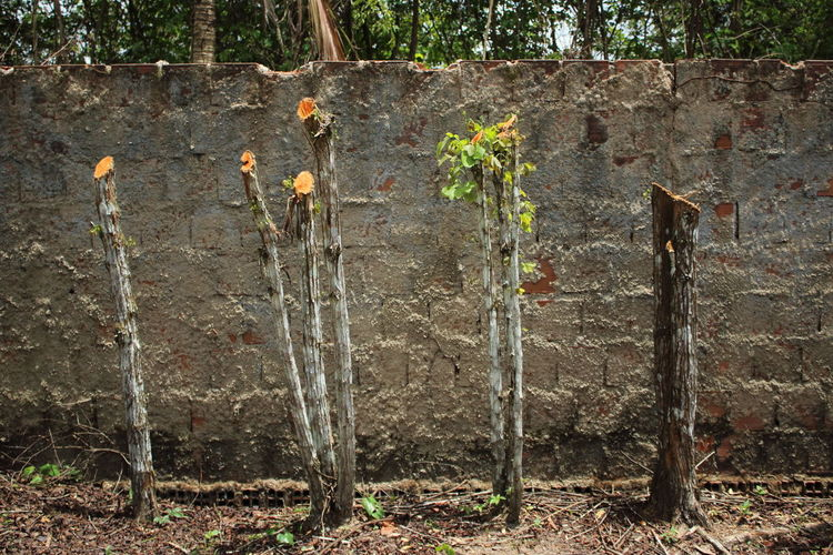 Contrast Growing Growth Nature No People Outdoors Sprout Sprouting Thematic Contrast Tree Trunk Weathered WoodLand