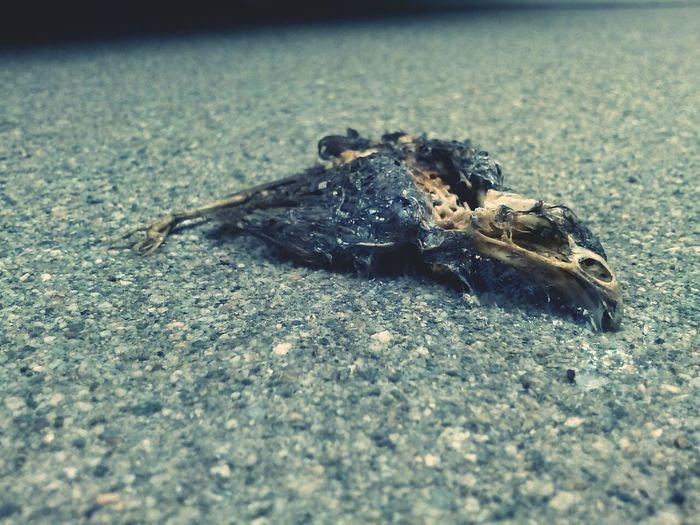 Dead asf Dead Rotting Away Bird Photography