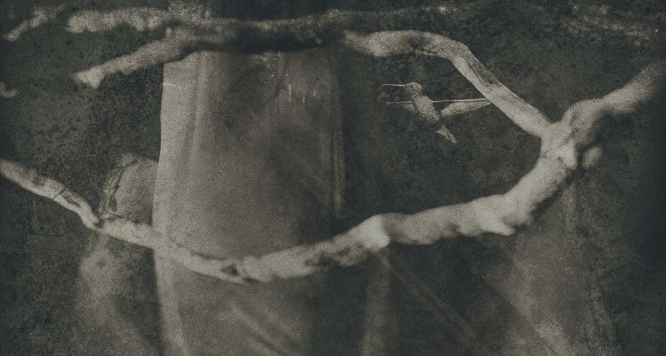 El reclamo del colobrí ArtWork Fragility Fine Art Postprocessing Textured  Introspection Poesíavisual Oniric Surrealart Experimental Artphotography Creativity