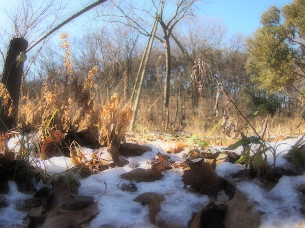小人さん目線で残雪 - lingering snow. 結局、今日の雪は積もらなかったですね(^_^;) Snow Winter Winterscapes Fairy World Nature Nature_collection EyeEm Nature Lover Enjoying Life Snapshot