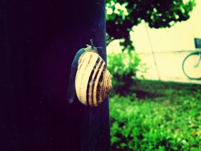 Nature Slow Life Snail Relaxing
