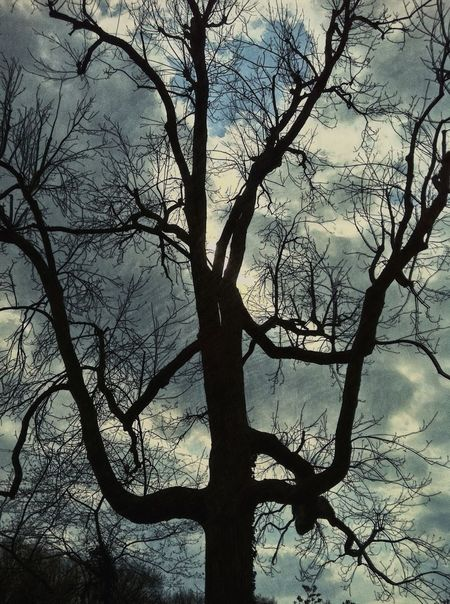 Mystic Tree Mood TreePorn Moody Sky Mood Captures Spooky Moody EyeEm Best Edits Jopesfotos - Nature