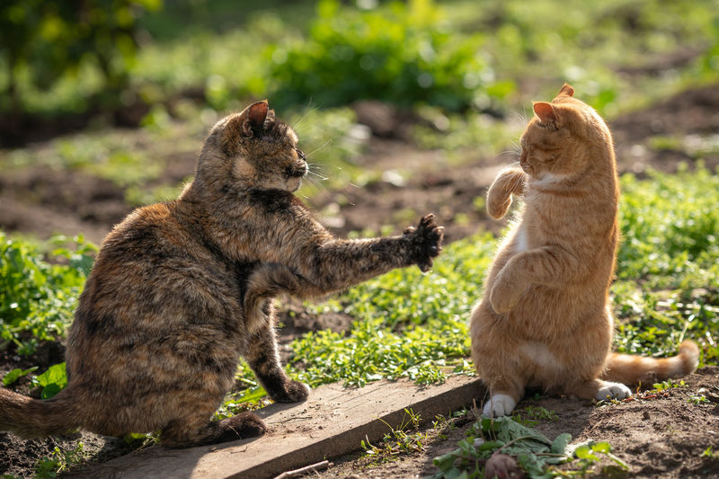 Two cats on plants outdoors