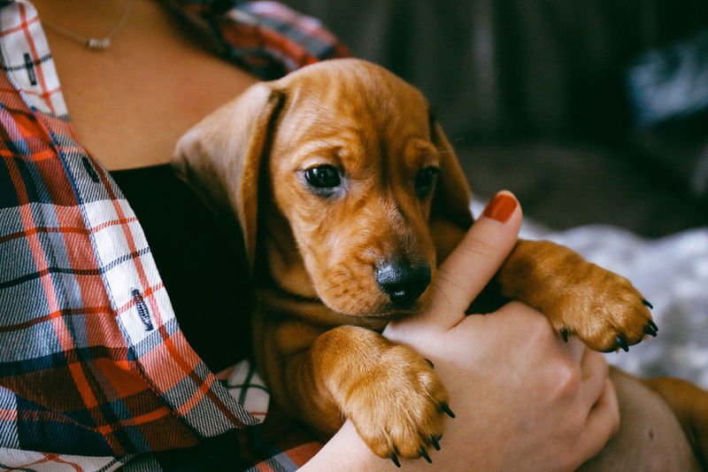 Close-Up Of Person Holding Puppy