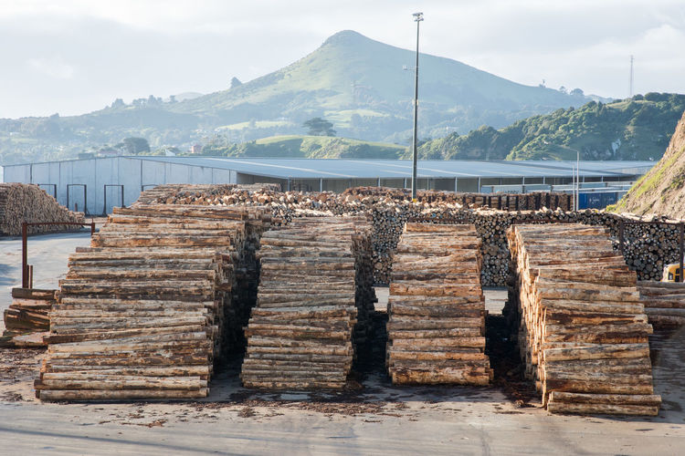 Port Chalmers, Dunedin, New Zealand: December 11,2016: Port waterfront with stacked logs and mountain scenery in Dunedin, New Zealand Dunedin Forestry Harbour Industry Logging Beauty In Nature Cloud - Sky Export Log Mountain Mountain Range Mountains Nature New Zealand Otago Outdoors Port Port Chalmers Resources Scenics - Nature Shipping  Stack Tree Water Wood - Material