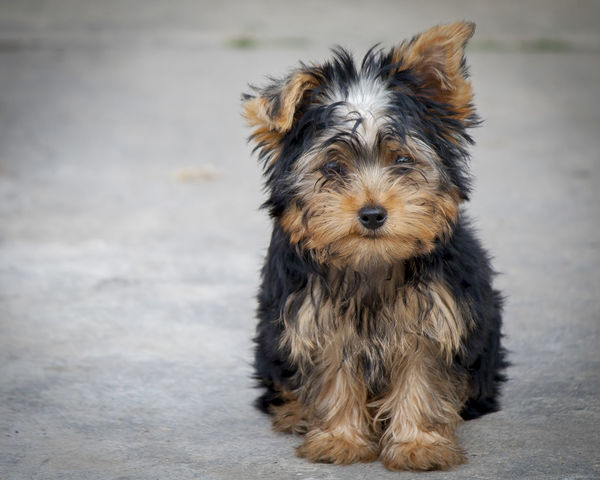 Juanito Dog Dog Love Cute Pets Cute Love