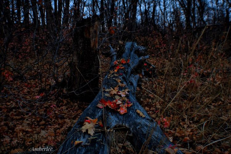 Autumn Leaf Change Forest Nature Tree Dry Branch Outdoors Maple Leaf Tranquility No People Beauty In Nature Day Maple Growth Winter Cold Temperature Fly Agaric Mushroom Perspectives On Nature Mountain Landscape Nikonphotography EyeEm Gallery Awesome_shots Perspectives On Nature
