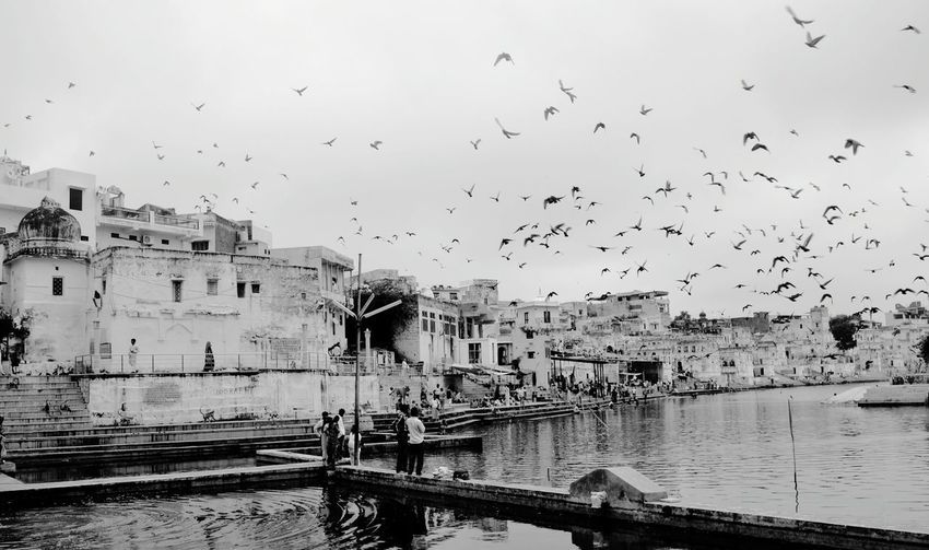 Black & White Temple Lake Of Pushkar India Birds Lake
