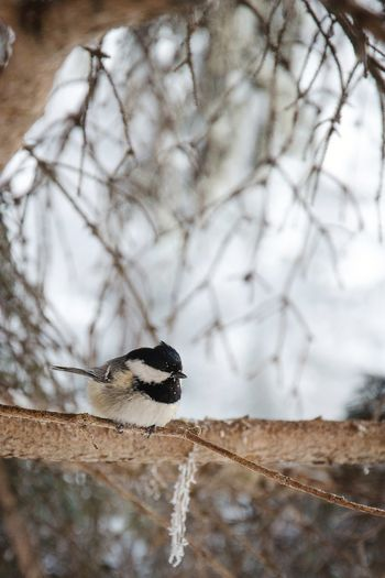 Low angle view of a bird on tree