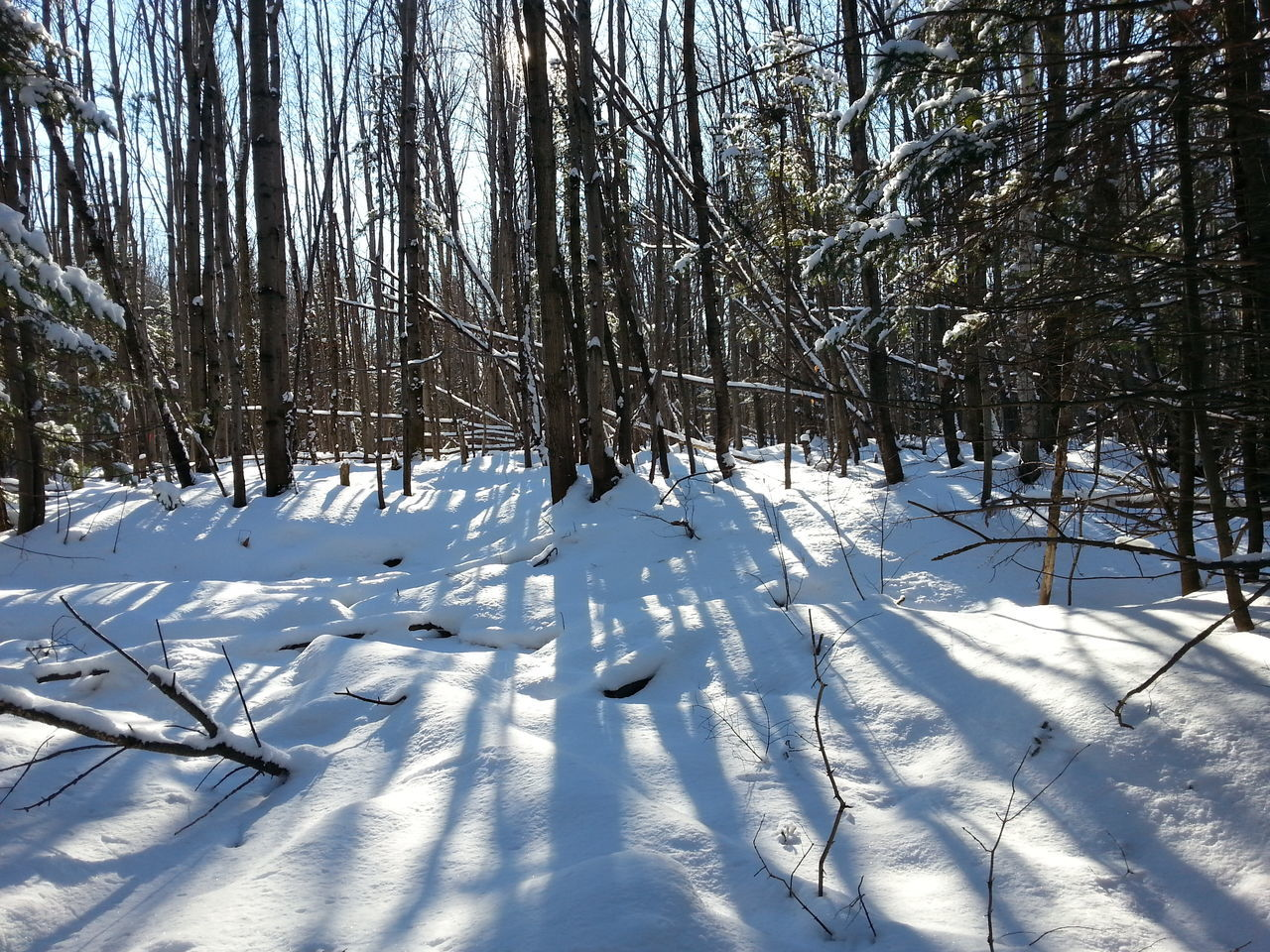 winter, cold temperature, snow, tranquility, nature, tranquil scene, white color, beauty in nature, tree, bare tree, scenics, weather, sunlight, day, outdoors, no people, shadow, landscape
