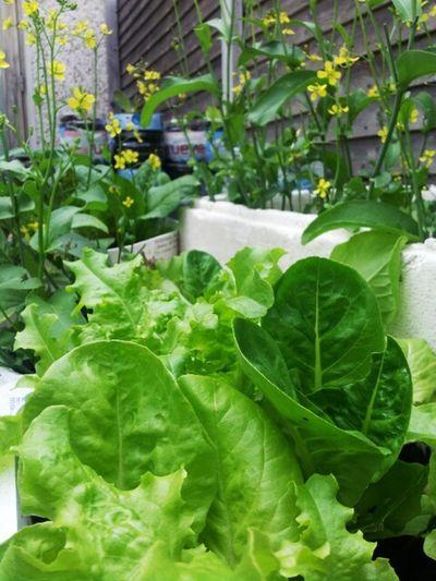 Vegetables In My Garden My Hobby :) Happy Life ♥