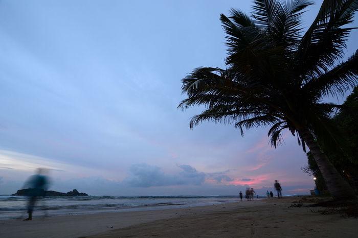 Bentota beach at dusk. Sri Lanka Beach Beachscape Beauty In Nature Bentota Bentota Beach Blue Ceylon Dusk Dusk Colours Indian Ocean Island Nature Outdoors Palm Tree Scenics Sea Shore Sri Lanka Sunset Tranquil Scene Tranquility Tropical Tropical Paradise Walking On The Beach