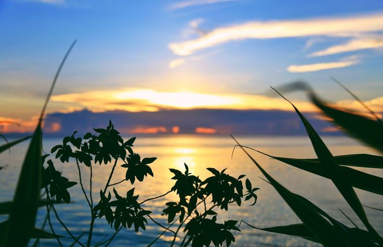 sunset Nature Beauty In Nature Growth Sunset Sky Flower Plant