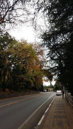 Дорога в Сочи. Ноябрь. Sochi Сочи деревья осень Autumn листва Погода прогулка Road Car Tree Transportation The Way Forward Street Land Vehicle Day