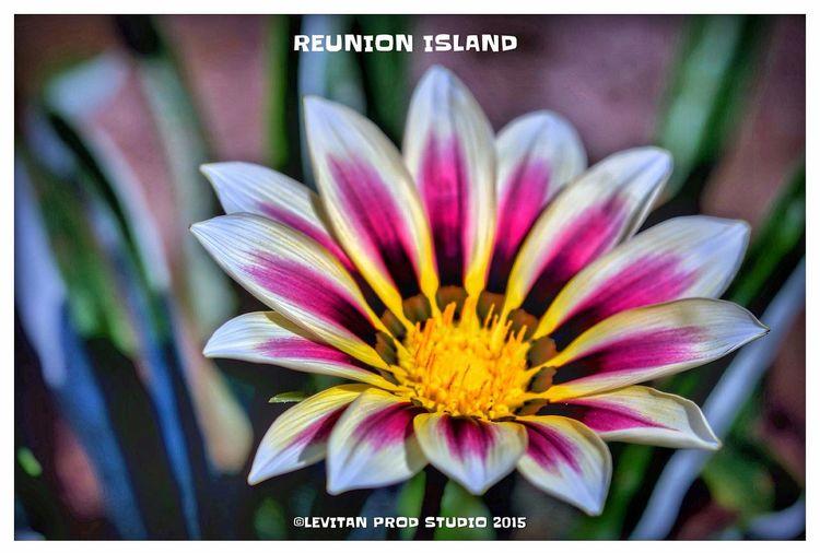 Hanging Out Taking Photos Enjoying Life Flowers Nature ST DENIS Reunion Island