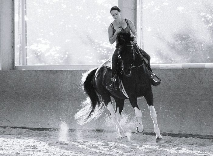 Horse Horseriding Westernriding