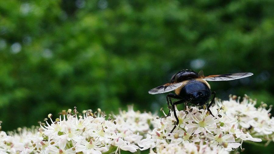 Flyingbugs
