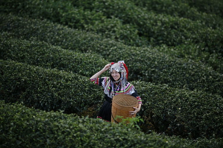 Hill tribe Asian woman in traditional clothes collecting tea leaves with basket in tea plantations terrace, Chiang mai, Thailand collect tea leaves One Person Hat Plant Clothing Adult Green Color Agriculture Rural Scene Landscape Women Growth Nature Front View Farm Land Young Adult Field Young Women Hair Outdoors Plantation Tea Crop Hairstyle