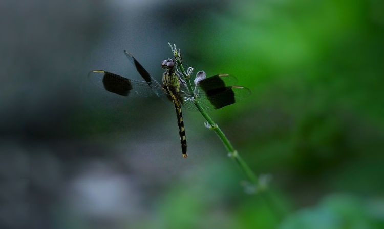 Black velvet Black Dragonfly Dragonfly Inscect Animal Themes One Animal Focus On Foreground No People Animal Wildlife Nature Outdoors Close-up