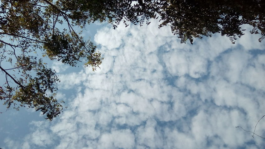 Low Angle View Sky Tree Cloud - Sky Nature Beauty In Nature Growth No People Day Tranquility Backgrounds Branch Outdoors Neem Tree Clouds And Sky Clouds Clouds Collection Clouds In The Sky