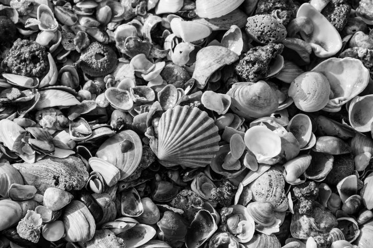 Pebble Full Frame Large Group Of Objects Backgrounds Abundance No People Seashell Beach Nature Close-up Day Outdoors Pebble Beach