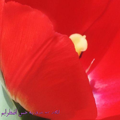 ✨Happy New Year ✨the oldest, most beautiful and most meaningful turning of the year. The beginning of spring and New Year in Iran 🌸 تا ساعتى ديگر نوبهار پاى در سرزمين اهورايى من خواهد نهاد. قدومت مبارك. براى هموطنانم آرامش، سلامتى، شادكامى و بركت به همراه داشته باش. سال نو مبارك ✨🌹✨ NNowruznNew DayCCelebrationAAncient CelebrationHHappynewyearin tTehran- iIranسسال نومبارك