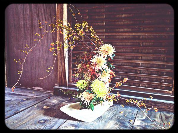「華道 月輪未生流」のいけばな Japanese Style Temple Flower Arrangement Flowers