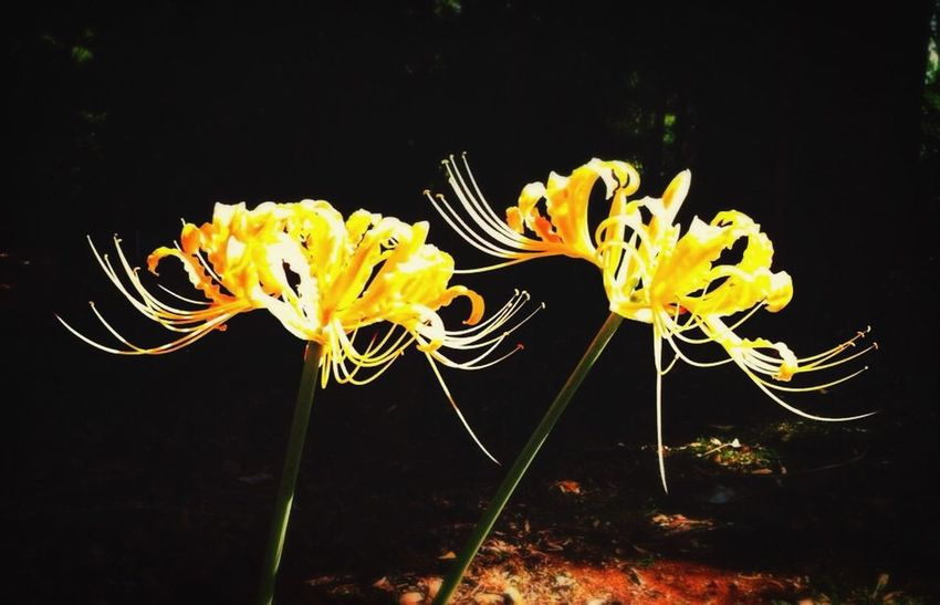 Nature Nature_collection EyeEm Nature Lover Flowers Yellow Coldplay Check This Out Vscocam
