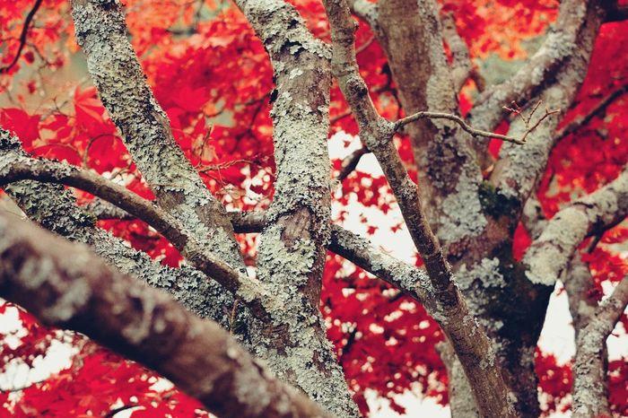 Lichen Lichen On A Tree Autumn Autumn Colors Tree Rnifilms Brighton Acer