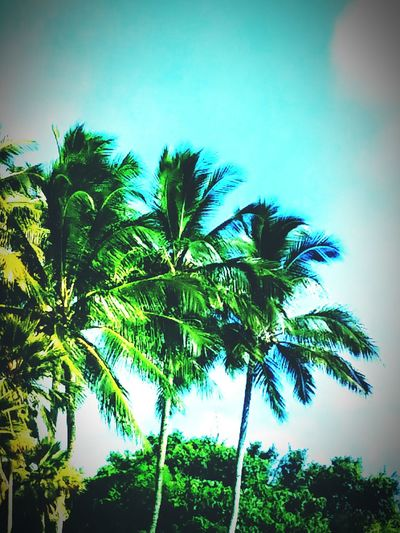 Scenery Kauai♡ Nature Paradise Open Edit Beautiful Day Coconut Trees
