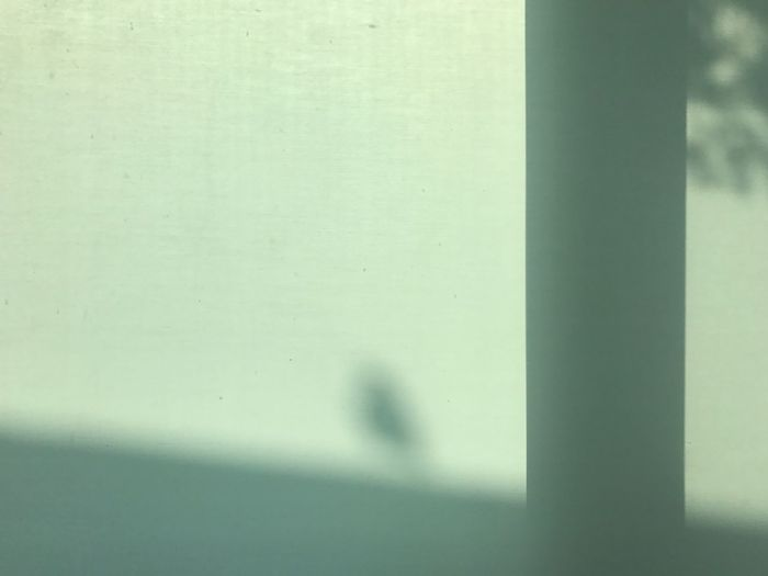 Day No People Shadow Close-up Indoors  Defocused Nature Animal Themes