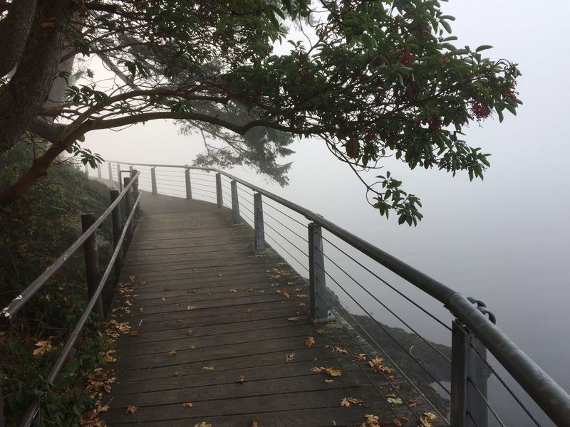 Foggy boardwalk with Madrona Foggy Path Foggy Path By The Sea Madrona Tree Northwest Boardwalk On The Bay Boardwalk By The Sea Foggy Morning Plant Tree Nature Railing Water Tranquility Day